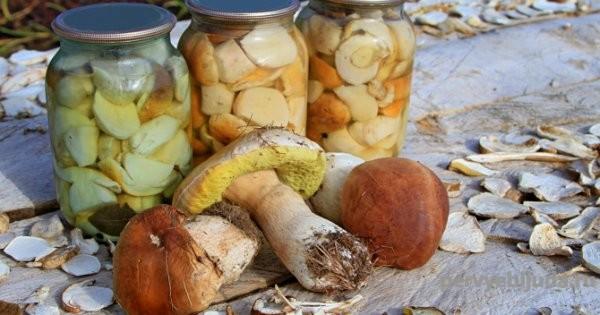 Как мариновать белый гриб на зиму