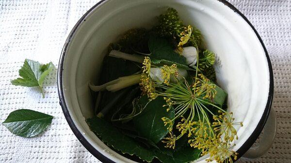 зелень для засолки огурцов
